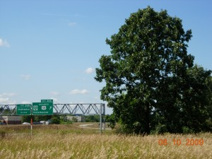 A bur oak at the west edge of the Colony Farm Orchard with US-131 in the background
